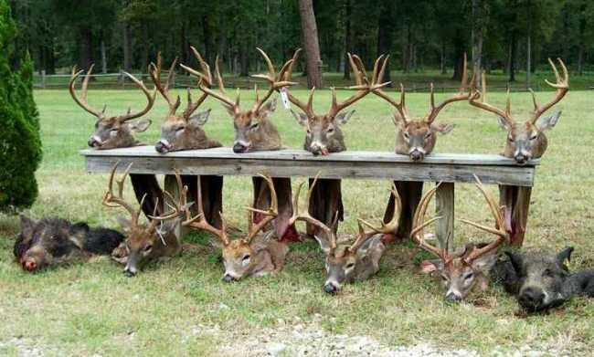 Bag Of East Texas Big Bucks. Taken from Temple Inland's Boggy Slough